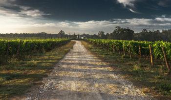 Destinos vacacionales para aficionados al vino