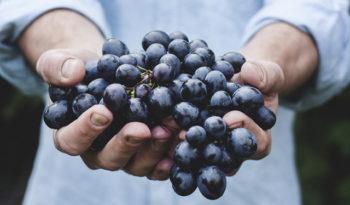 Fiestas dedicadas al vino en España