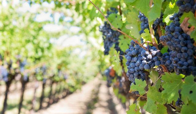 Rioja y Ribera del Duero. Dos formas de entender el buen vino